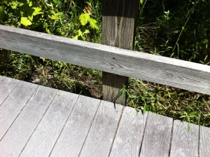 Smiley's tail disappearing beneath the boardwalk