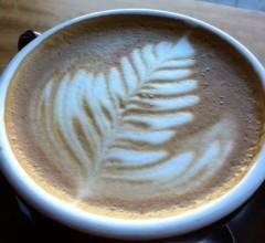 Rhoads_coffee_leaf